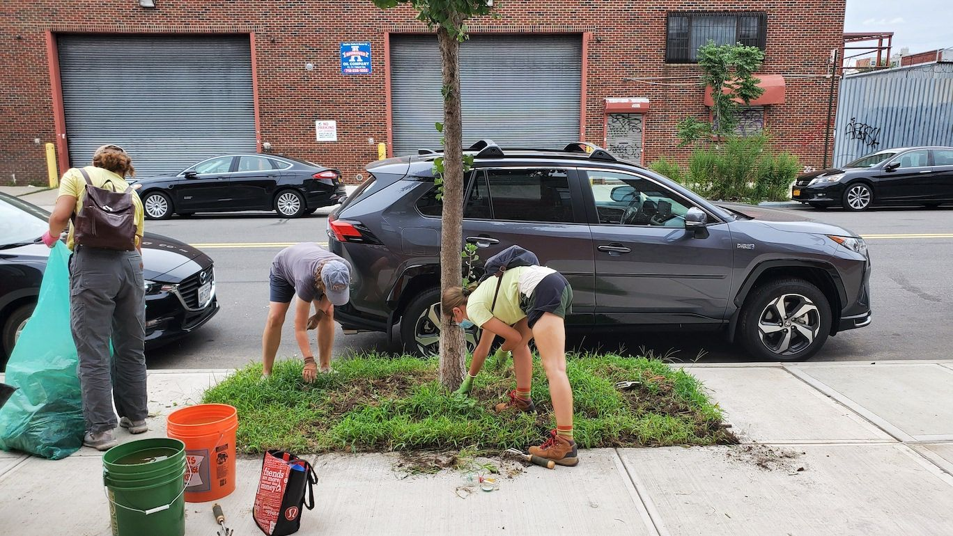 """Caring for Brooklyn's """"Urban Forest,"""" One Tree at a Time"""